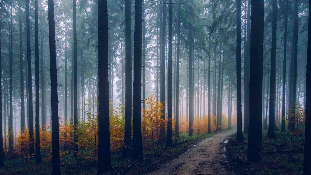 Na drogi leśne elektryczna hulajnoga terenowa jest idealna